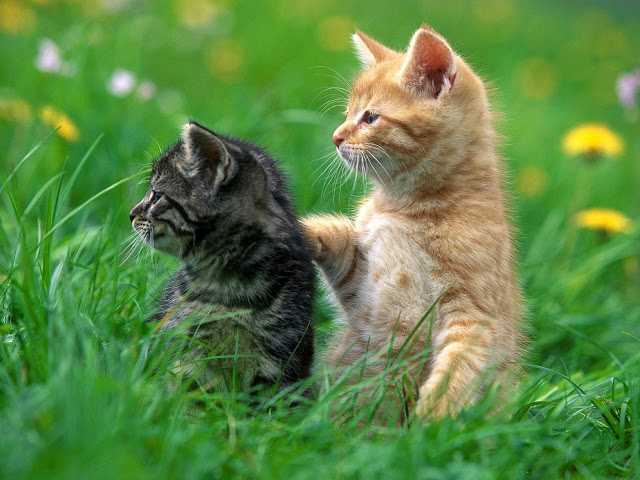 funny cat photos wallpaper hd